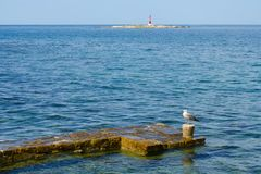 Seagull and lighthouse Royalty Free Stock Image