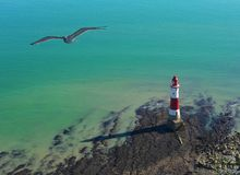 Seagull and lighthouse on a sunny day in Seven Sisters Stock Photo