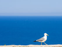 The Seagull of the Lighthouse Stock Photos