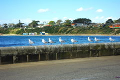 Seagull line up Royalty Free Stock Photo