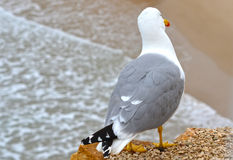 Seagull looking at the beach stock images