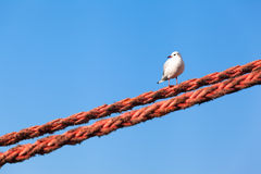 Seagull Looking Left Down Royalty Free Stock Images