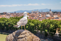 Seagull looking Rome Skyline Royalty Free Stock Image