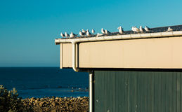 Seagull Lookout Stock Photography