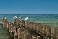Seagull looks Stock Photo