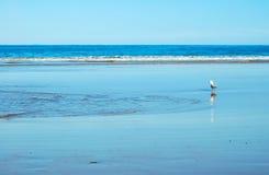 Seagull - Lorne Fotografia Royalty Free