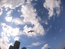 Seagull lot w niebieskim niebie z few chmury na Barra da Tijuca& x27; s plaża Rio De Janeiro, Brazylia, - zdjęcia stock