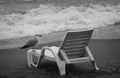 Seagull. On a lounger on the beach Stock Images