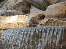 Seagull ma przerwę zdjęcia stock