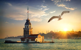 Seagull and Maiden Tower Royalty Free Stock Images