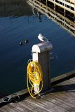 Seagull in Malmo. Seagull posing on the promenade at sunset Stock Photography