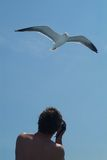 Seagull and man. Seagull and photographer Stock Photos