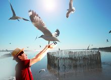 Seagull and man in thailand royalty free stock image