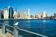 Seagull with Manhattan in background. Focus on the bird. Stock Images