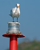 Seagull on marker buoy Royalty Free Stock Photos