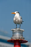 Seagull on marker buoy Royalty Free Stock Photography