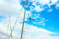 Seagull between masts Royalty Free Stock Photo