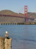 Seagull med hav och den guld- portbron Royaltyfri Bild