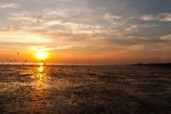 Seagull med solnedgång Arkivfoton