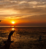 Seagull med solnedgång Arkivbild