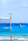 Seagull on mexican beach Stock Images