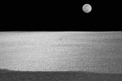Seagull in the Moonlight Stock Image