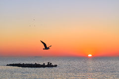 Seagull in the morning. Seagull flying in the morning, over the Black Sea, Constanta Royalty Free Stock Images