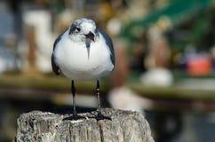 Seagull morzem Zdjęcia Royalty Free