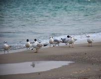 Seagull morzem obraz stock