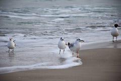 Seagull morzem obrazy royalty free