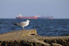 Seagull mot en bakgrund av lastskyttlar Arkivfoton