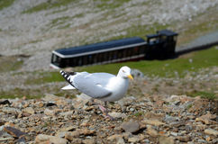 Seagull. And mountain train in background stock photos