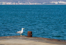 Seagull nära Sunny Beach Royaltyfri Fotografi
