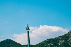 Seagull na łódkowatym moorage Zakończenie W Montenegro Adriatycki S Fotografia Stock