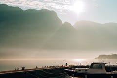 Seagull na łódkowatym moorage Zakończenie W Montenegro Adriatycki S Fotografia Royalty Free