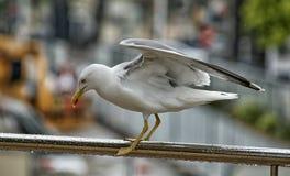 Seagull na żelaznym poręczu przy dżdżystą pogodą z zamazanym tłem miasto Obraz Royalty Free