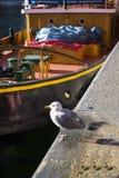 Seagull na Albert doku w Liverpool Merseyside Anglia Fotografia Royalty Free