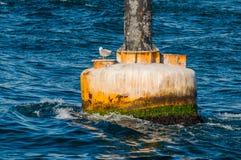 Seagull na brudny żółty boja w morzu śródziemnomorskim Zdjęcia Royalty Free