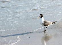 Seagull na brzeg Fotografia Royalty Free