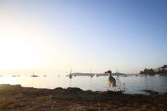 Seagull na brzeg przy zmierzchem Zdjęcia Royalty Free