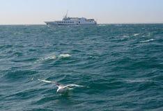 Seagull na Czarnym morzu obrazy royalty free
