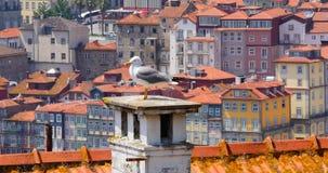 Seagull na dachu zdjęcie wideo
