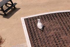 Seagull na dachu fotografia royalty free
