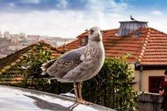 Seagull na górze miasta zdjęcia stock