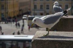 Seagull na granit skale Fotografia Stock