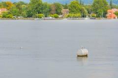 Seagull na kałuży na jeziorze Fotografia Royalty Free