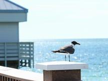 Seagull na molu Zdjęcia Stock