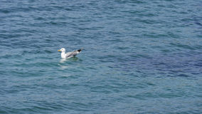 Seagull na morzu Zdjęcia Stock