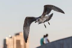 Seagull na niebieskim niebie nad ludźmi i miastem Obrazy Stock