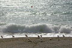 Seagull na plaży przeciw fala i błyskotania morzu obraz stock
